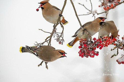 oiseaux hiverhbo1_500