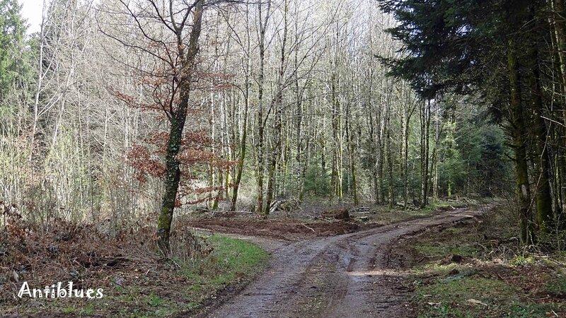 Chemin 5