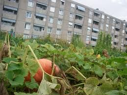 potagers_urbains