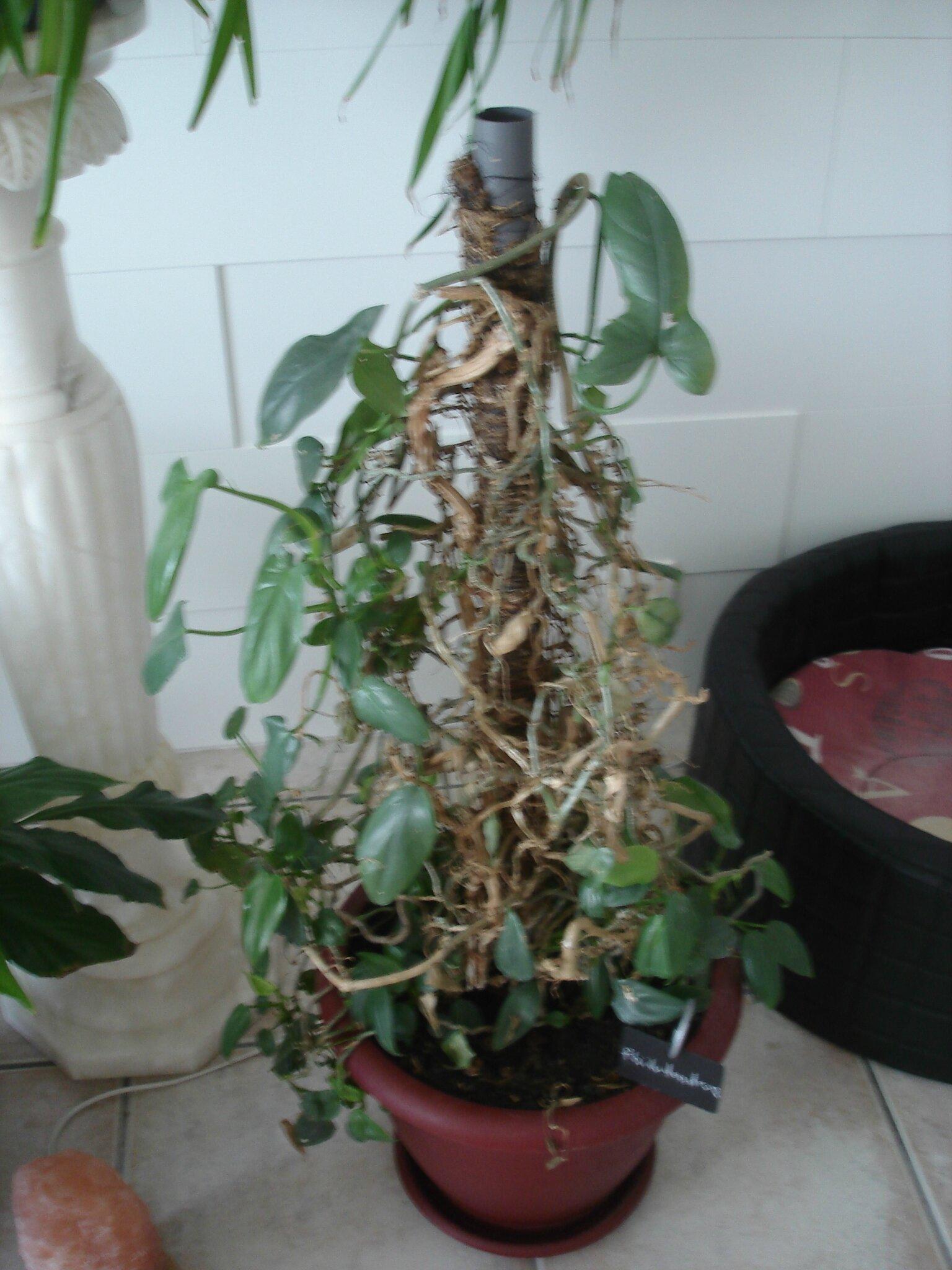 plante interieur dehors