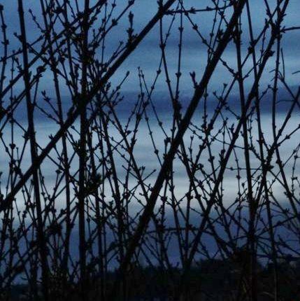 ciel en cage fév 2013 (5)