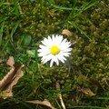 les fleurs de mon jardin10