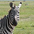 Tanzanie 21 avril au 1 mai 2014