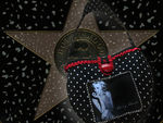 hollywood_s_star
