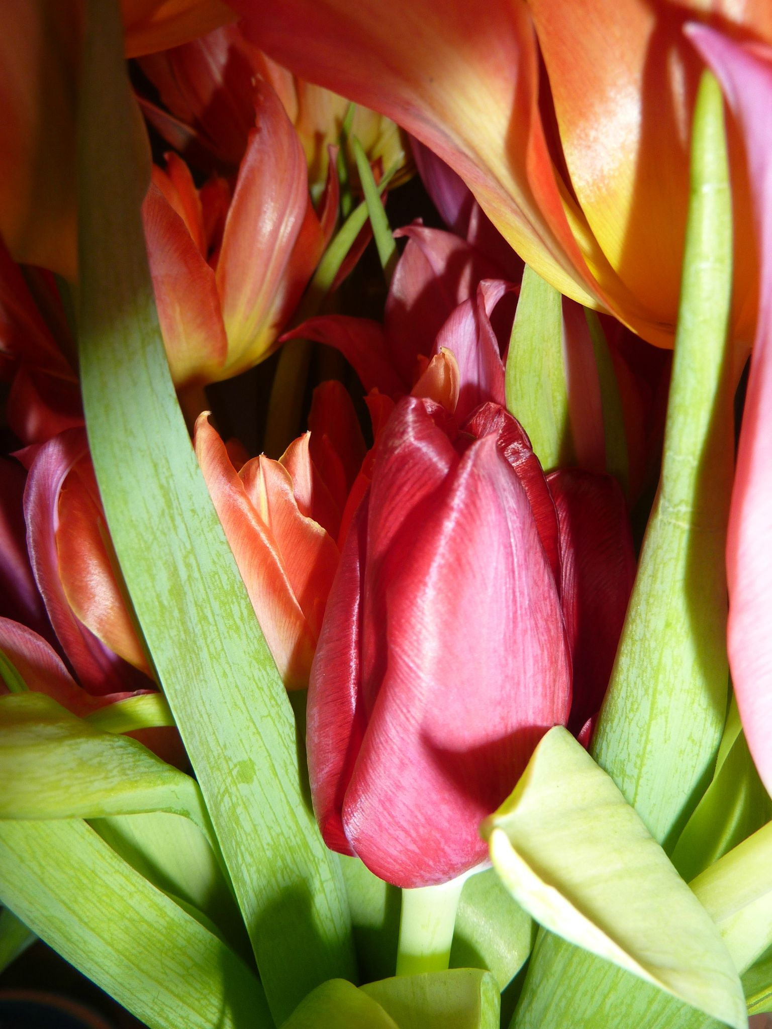 Bouquet de tulipes flamboyant popo cuistot for Bouquet de tulipes