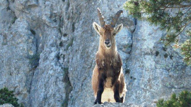 1552- Jasse Peyre Rouge- Rando hauts plateaux Vercors - 270515 (55)