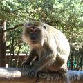 Labenne, la Pinède des singes (40)