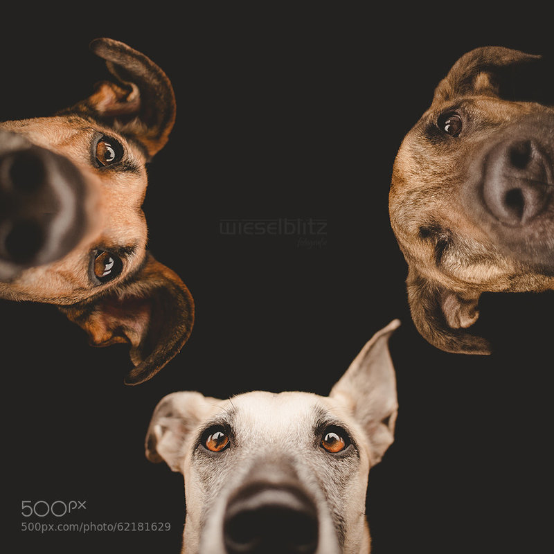 groupe chiens_2