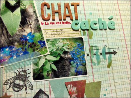 Chat caché (2)