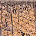 C'est la pause dans les vignes