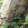 snake venimeux