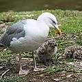 0024 Marais aux Oiseaux