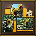 Jardin de mimou - tournesols