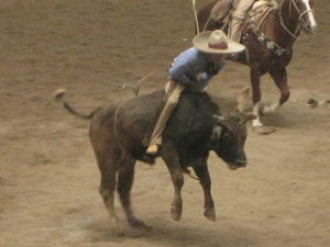 rodeo_053