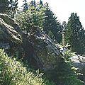 souche-barlagne