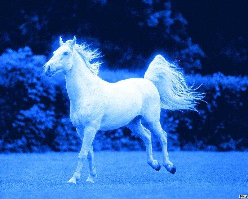 cheval bleu trottautrement
