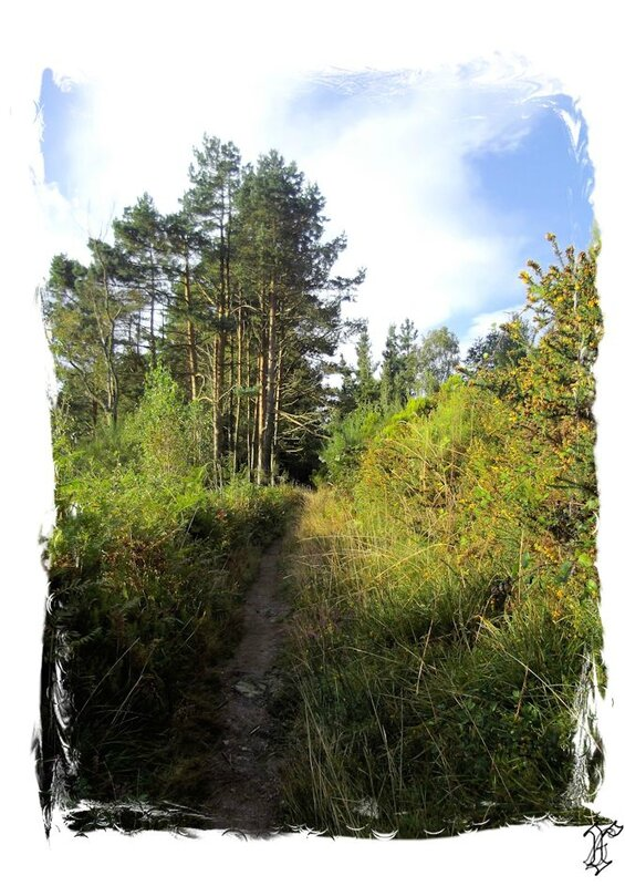 chemin arboré vers Alto de MONTOUTO_1