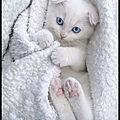 Image du jour - plus bleu que le bleu de tes yeux…