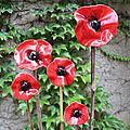 fleurs coquelicot