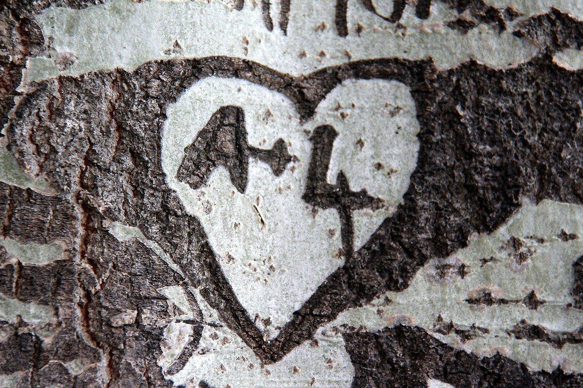 Coeur, arbre_8123
