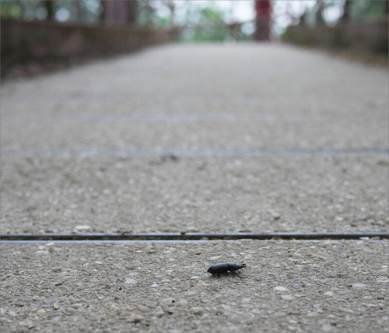 cref volant F piste jogging 090520 2