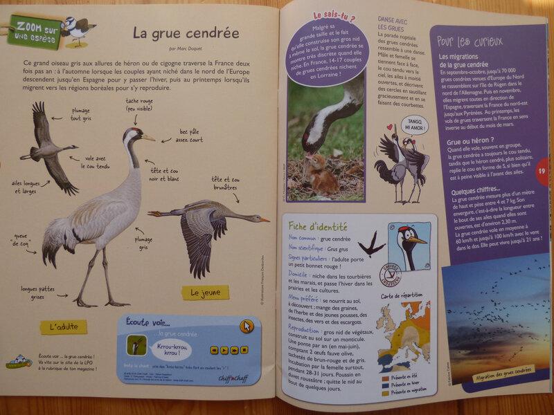 Oiseau Mag Jr 32 (4)