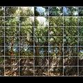 __FasilBaseOldTrees-Pano2 copie ECRAN