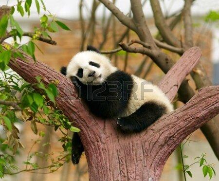 dormir-bebe-panda-geant