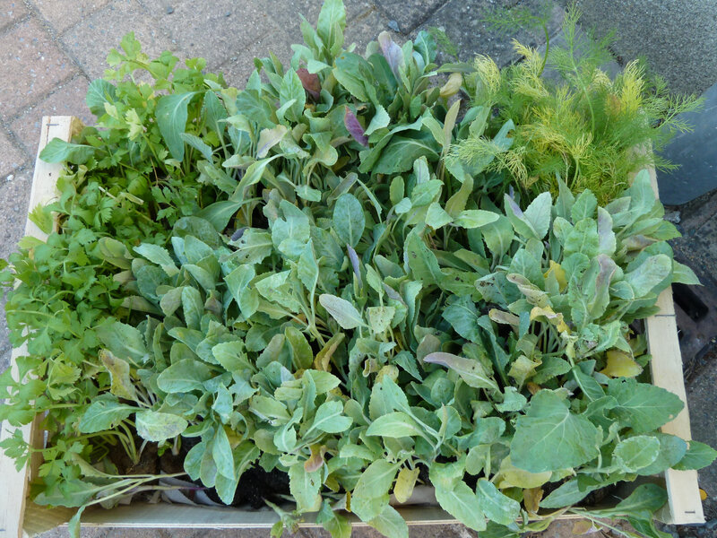 31-légumes de dédé (1)