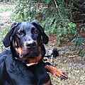 Beauceron lost 2012