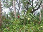 Guyane_0069