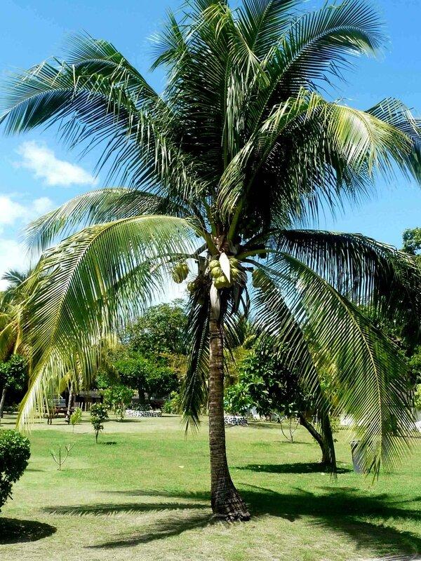 Des Caudrotais à TAHITI Septembre 2014-2 (30)