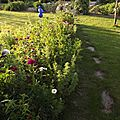 Windows-Live-Writer/jardin_6BD4/DSCF3632