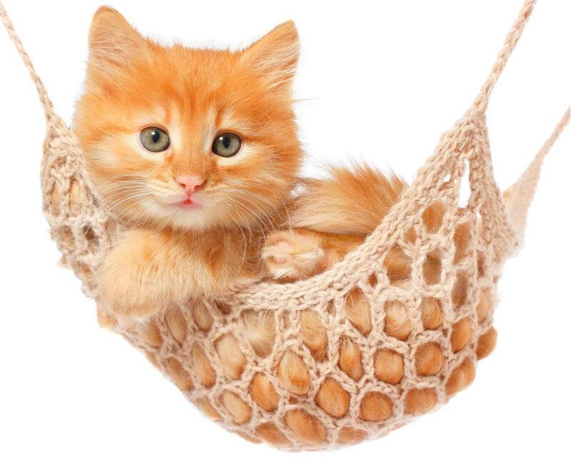 chat-heureux-entretien-article