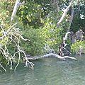 la mangrove de Godoria (la plus importante du pays)
