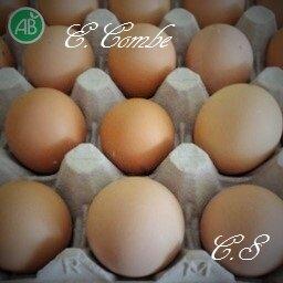Estelle_Combe_1