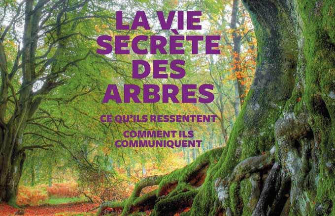 Vie-secrete-arbres-couv
