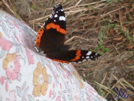 papillon_110729