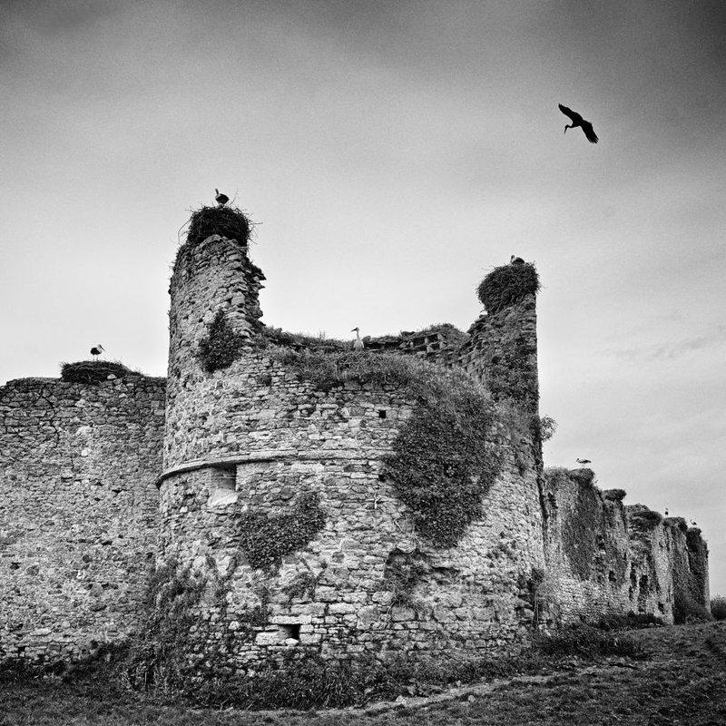 31- Le château des cigognes- Jacques ANGER