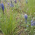 23 juin - sorensens - pine grove : de la fraicheur à l'humidité