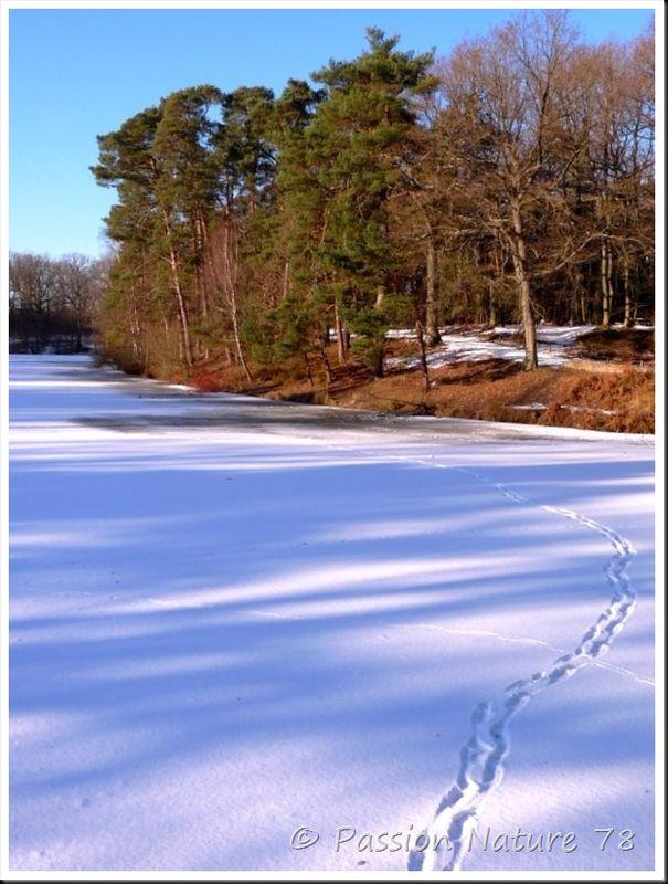 Traces d'animaux dans la neige (3)
