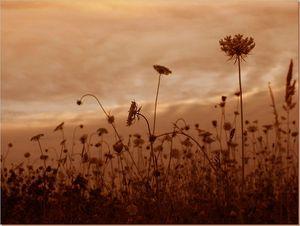 Fleurs crépuscule