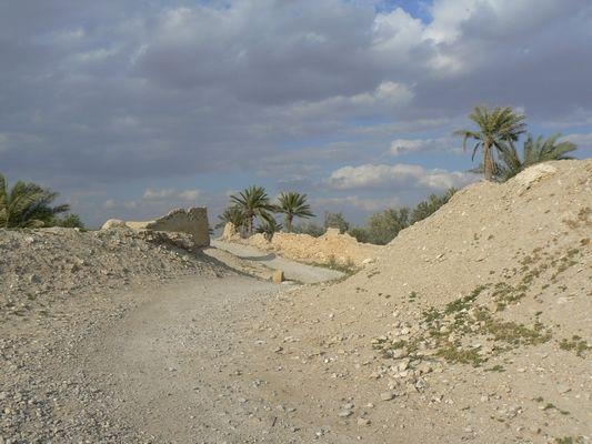 21 Vers la palmeraie de Palmyre