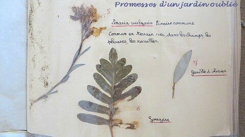 5 herbier