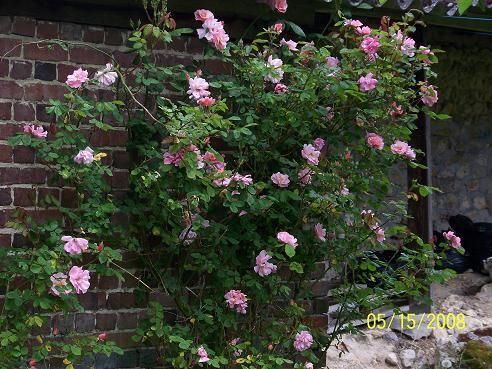 roses_jardin_003