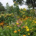 2008 09 06 Une partie de mon jardin, tournesols derrière