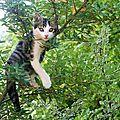 12_w_Virus arbre_PICT0102