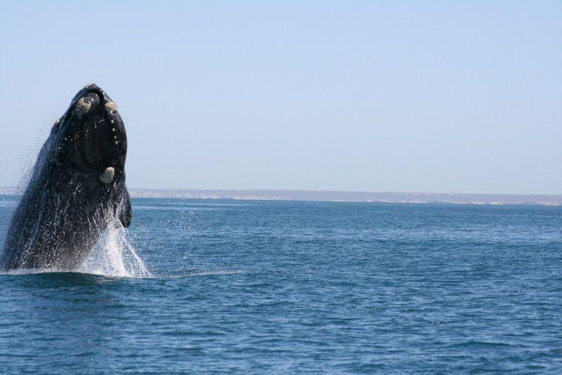 4saut de baleine