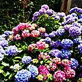 Fleurs de Cath et de Léon 140618