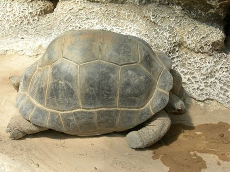 une_tortue